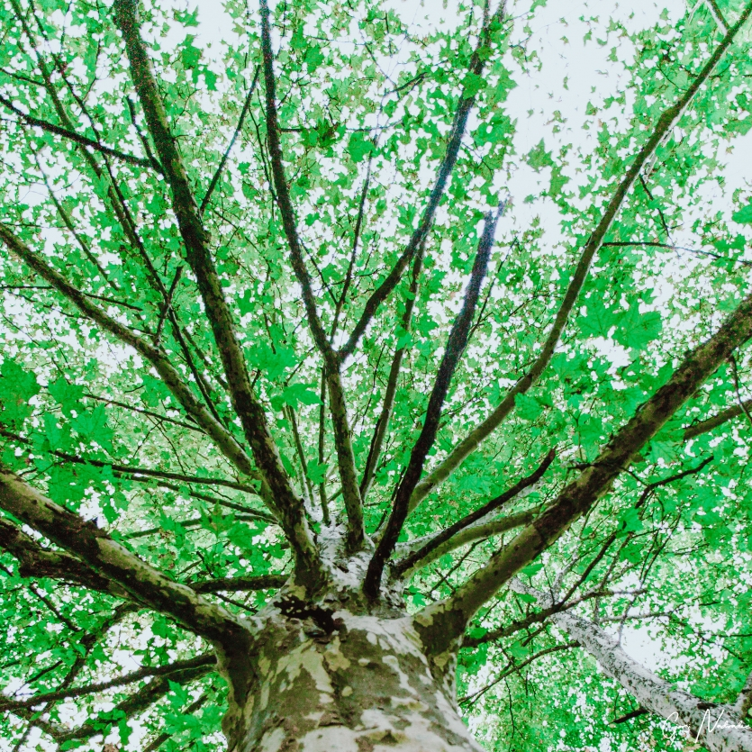Green trees and life