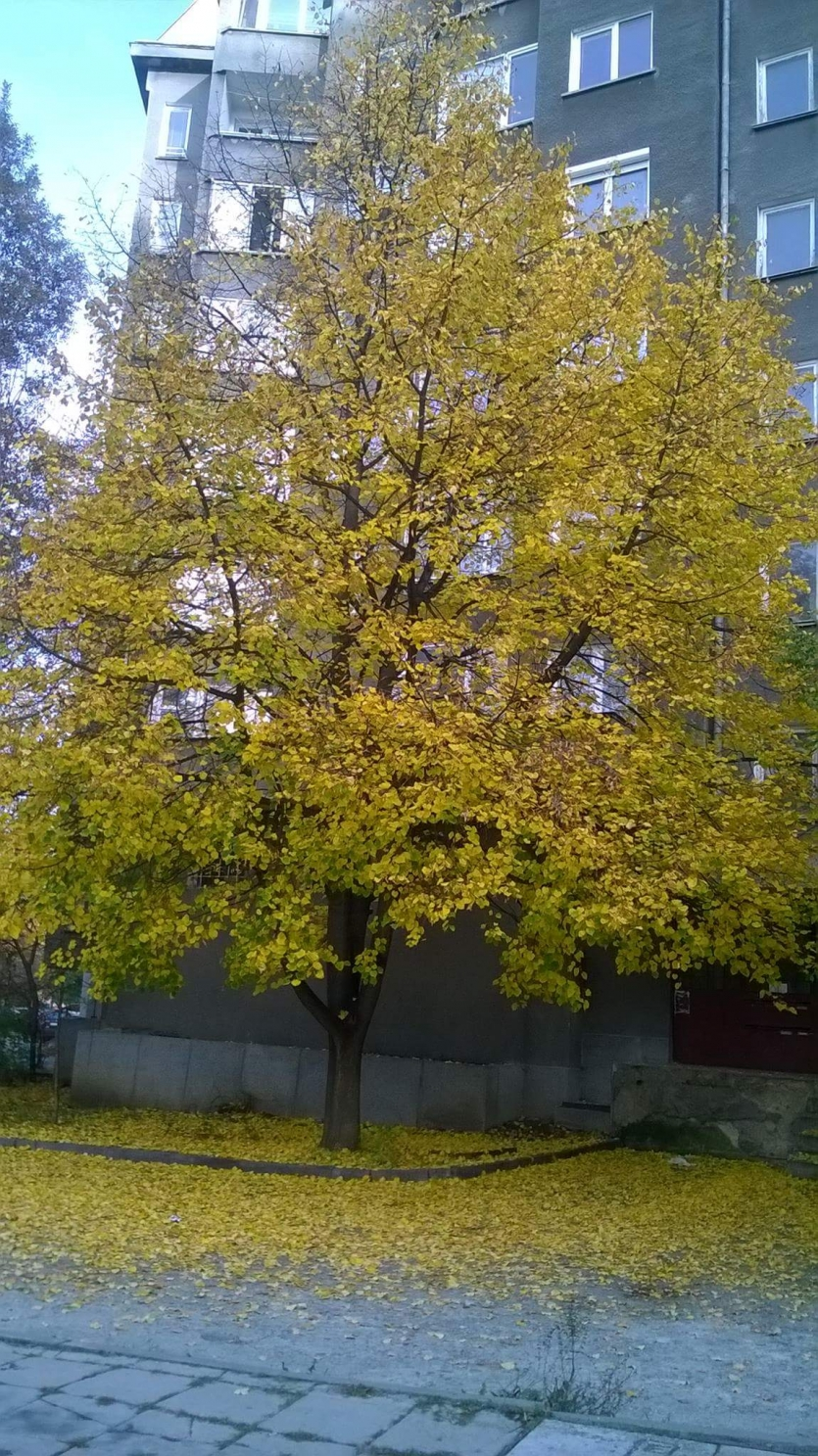 A golden tree in the city.