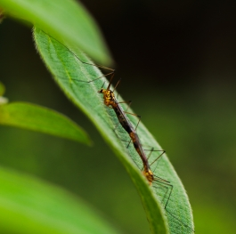 insect mating