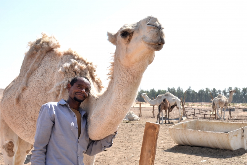 Camel keeper in Riyadh Village area
