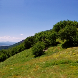 Our green mountains