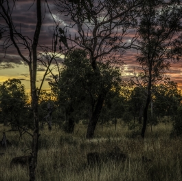 Sunset In The Bush