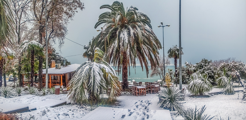 Snow-covered palm trees against the background of the Black Sea