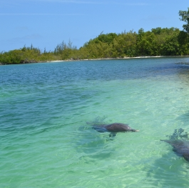 New friends at Cayo Largo, Cuba
