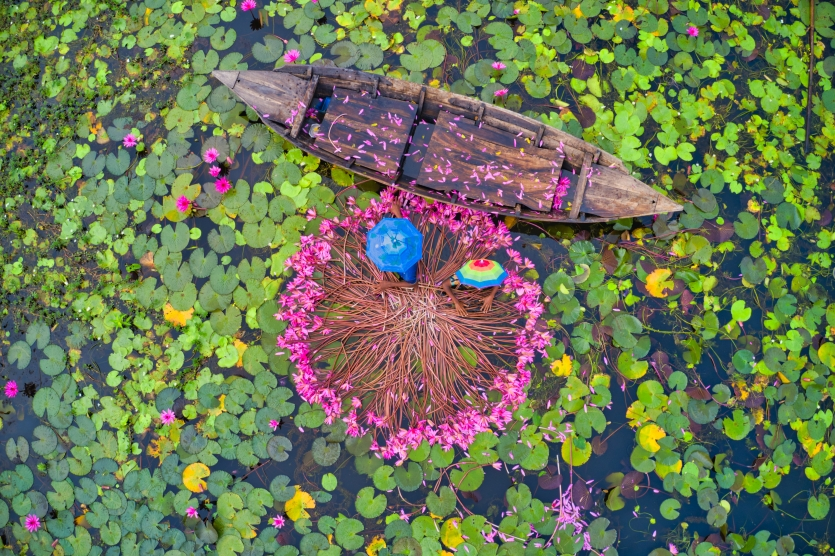 Harvesting waterlily