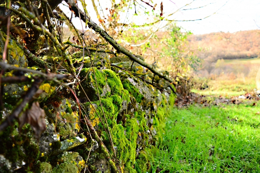 Old country wall