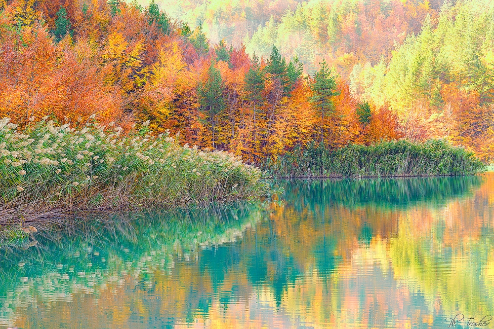 Autumn refletion
