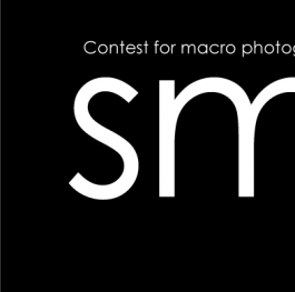 Photography contest  SMALL IS BIG