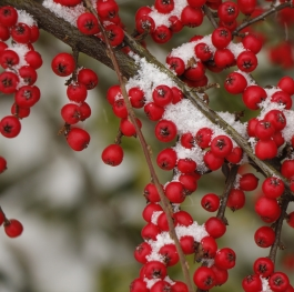Some cheerfulness in the grim winter