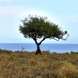 Black Sea Tree