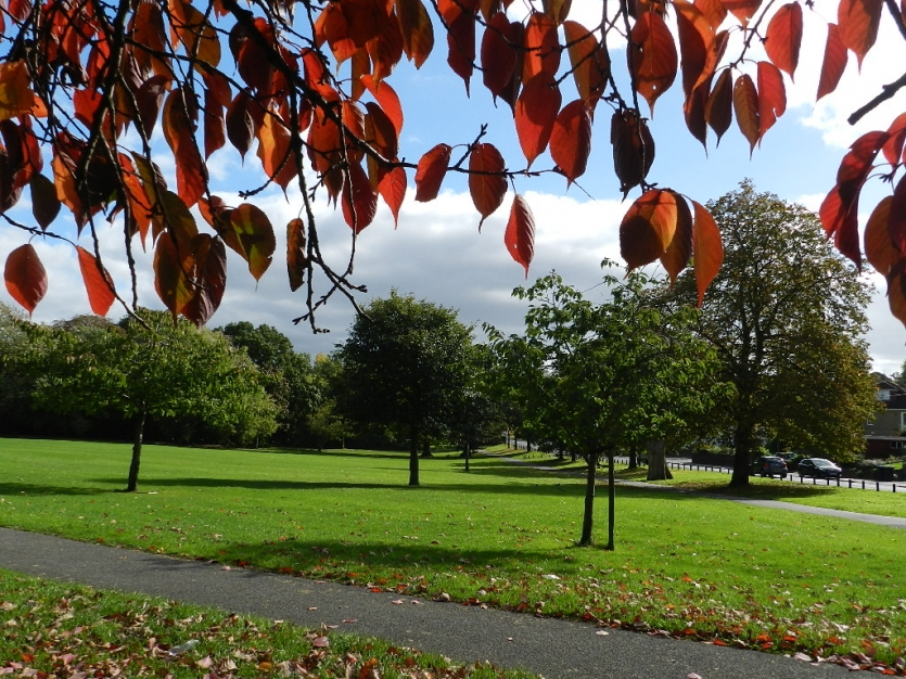 Early autumn in the park