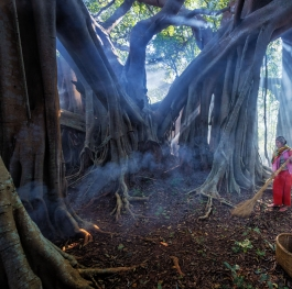 Under Old Banyan Tree