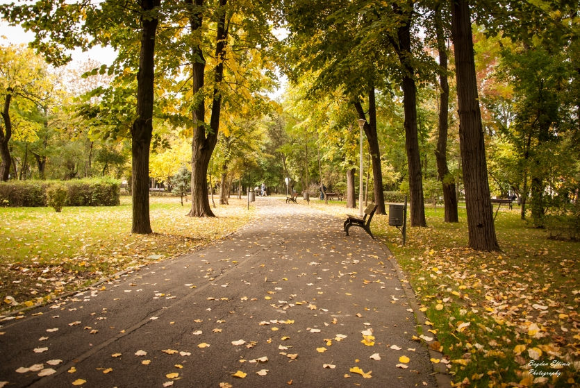 Fall over the park