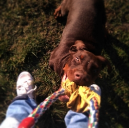Playin' with my doby...