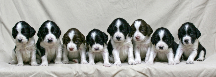 Sally's Litter