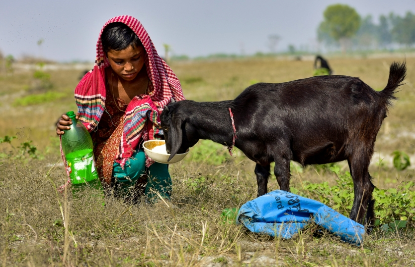 girl with her pet goat