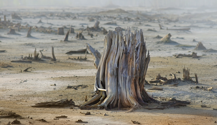 Dead tree. Man-made desert.