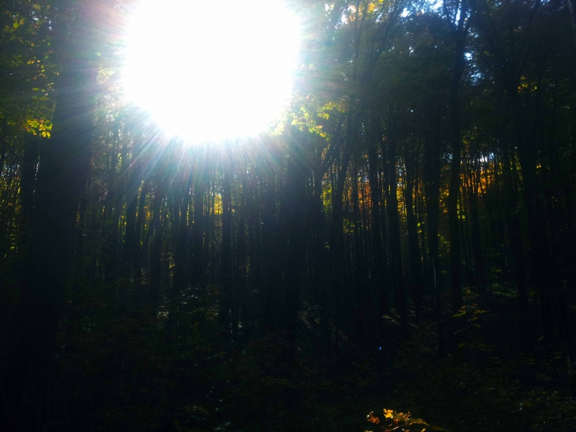 I see the sunshine through the thicket