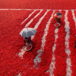 Red Chilli Workers