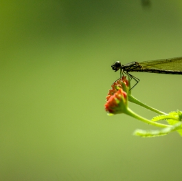 Hill side DragonFly