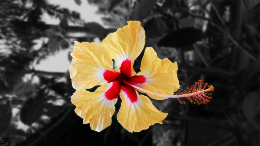 Color splash photography