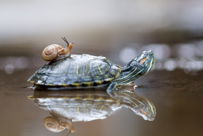 friendship of snails and turtles