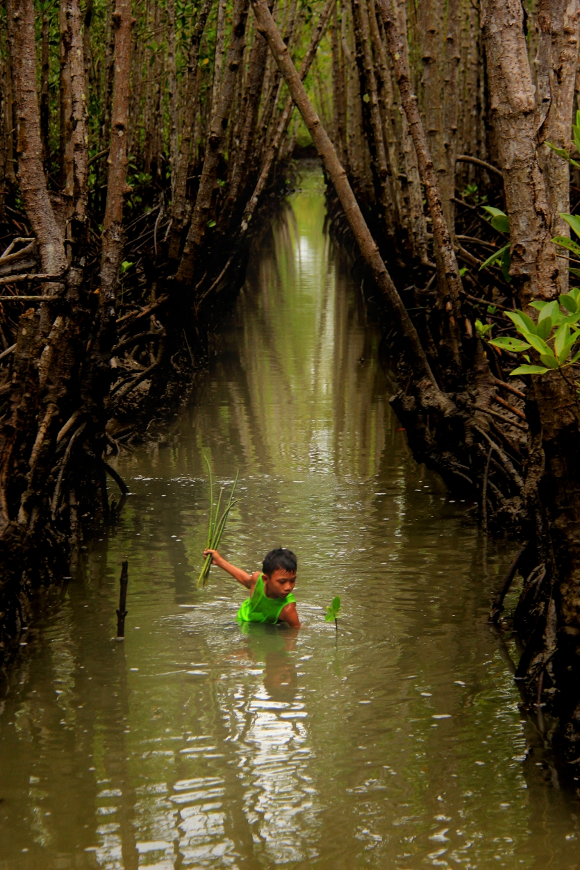 Planting Mangrove as a school asiignment