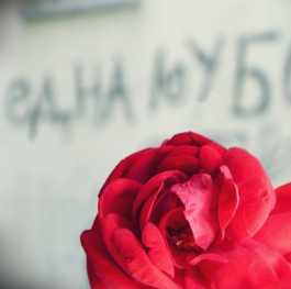 One Love - Red Rose