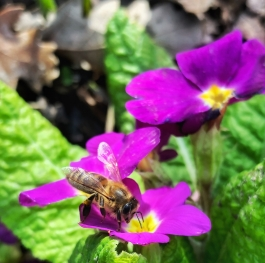 The Busy Bee