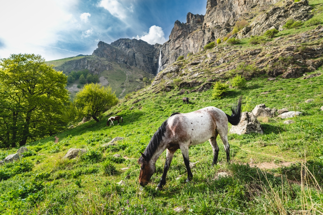 Horse on Balkan Mountain