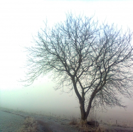 Foggy morning in Germany