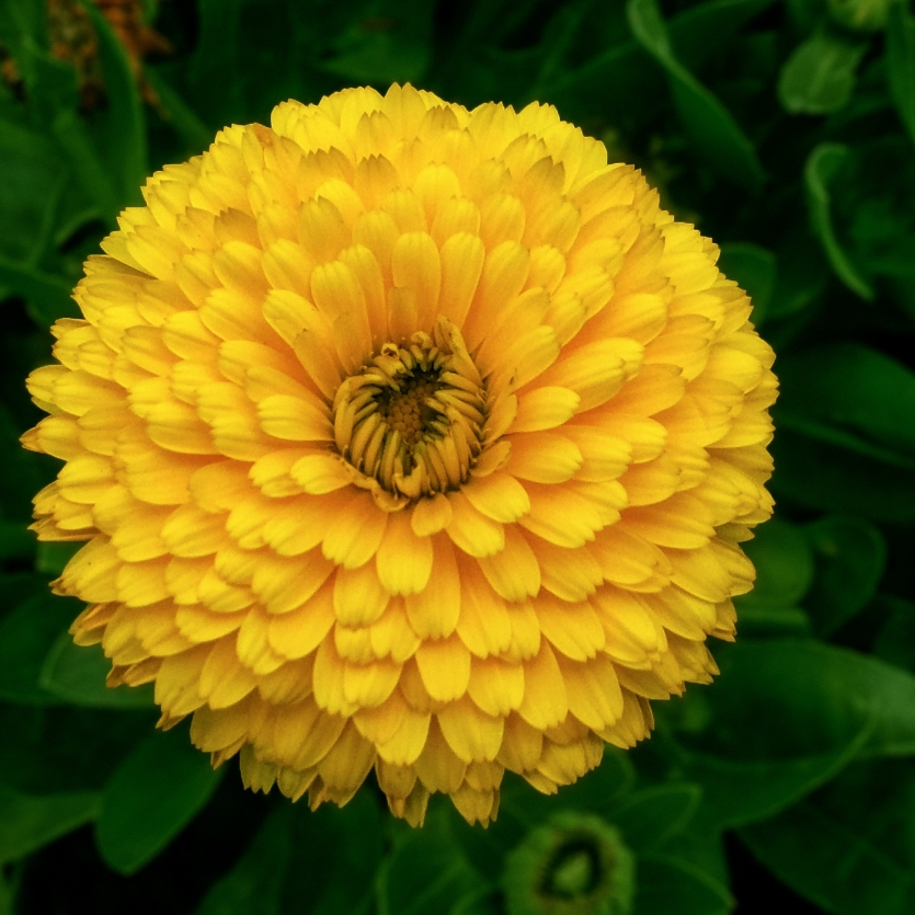 The beauty of the yellow .