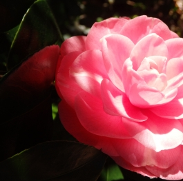 Flower with sunlight