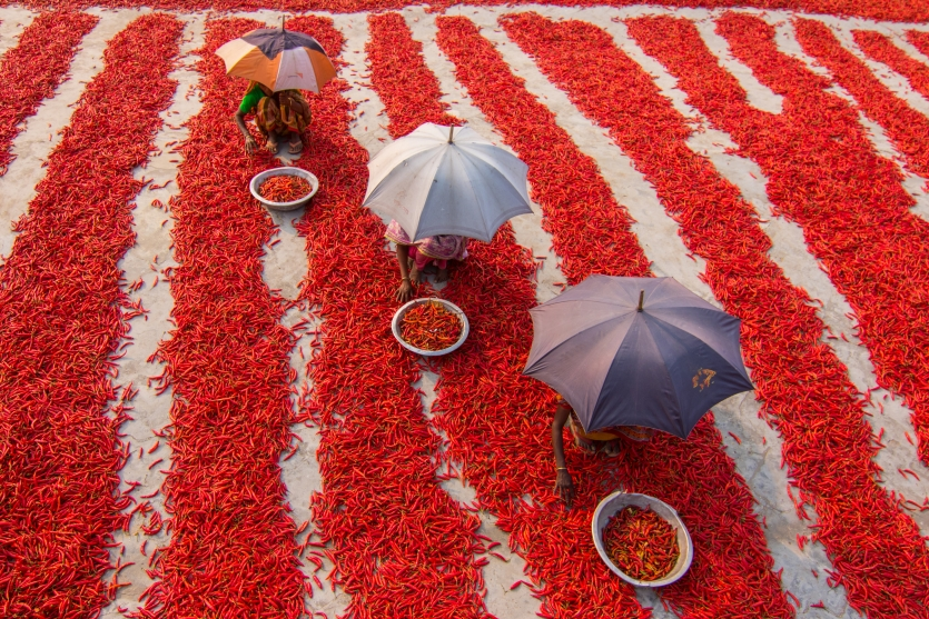 Red Chillies Land