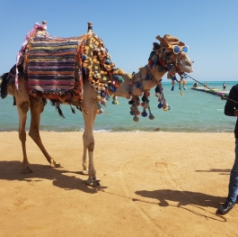 Chilling in Egypt