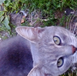 Cat from village