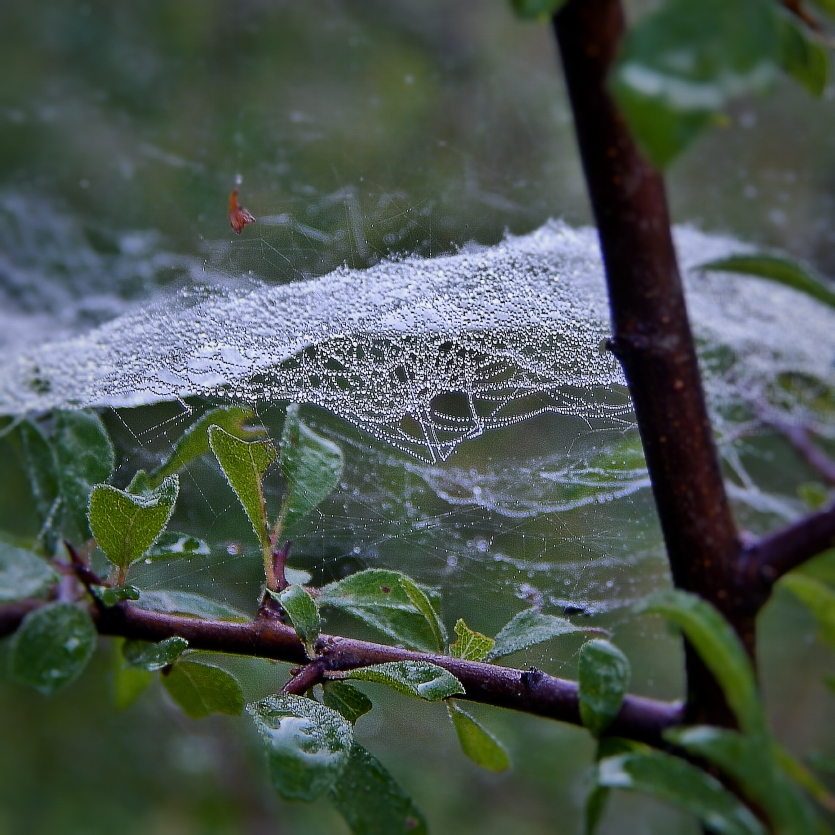 spider web deep into forrest