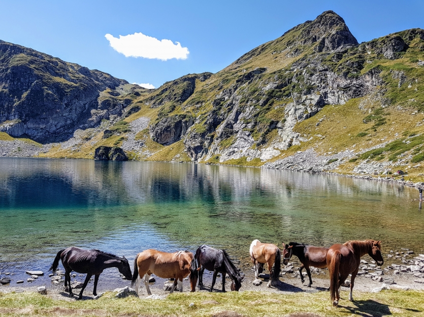 Horses in Rila mountain, Bulgaria