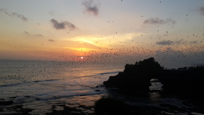 Beautiful Sunset Tanah lot temple (Bali) with birds