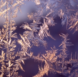 Winter magic and beauty frozen on the window. The revival of the winter fairy tale.