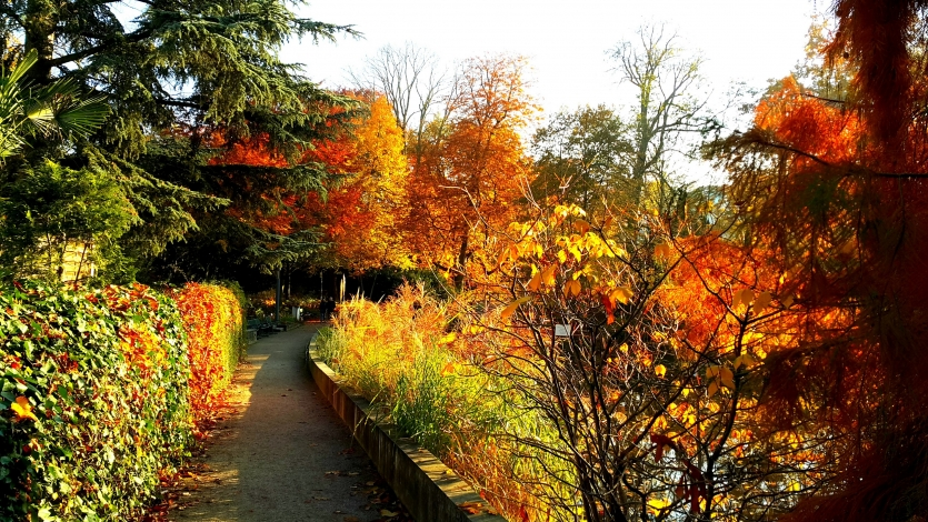 Autumn in Germany 1