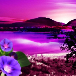 Nature purple