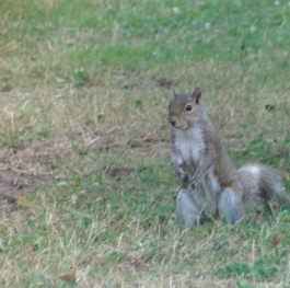 squirrely