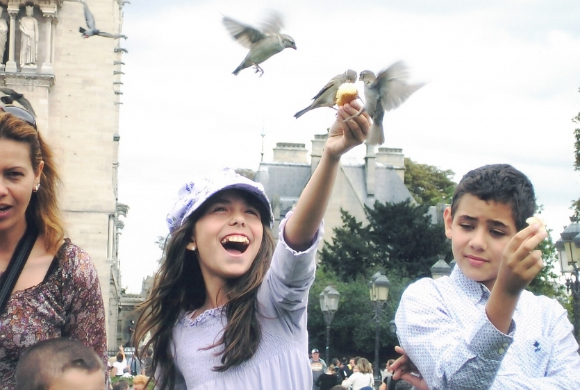 Feeding the birds of Notre Dame