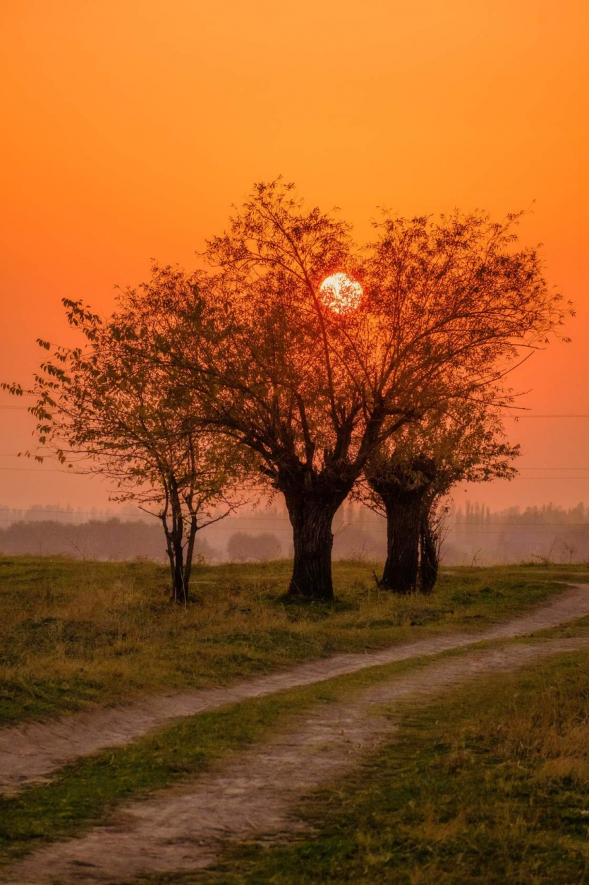 the sun in the branches