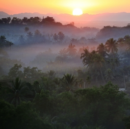 Mist over the jungle