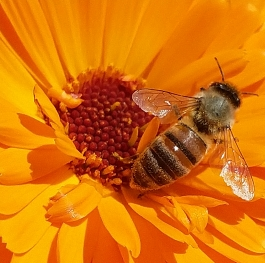 bee-day