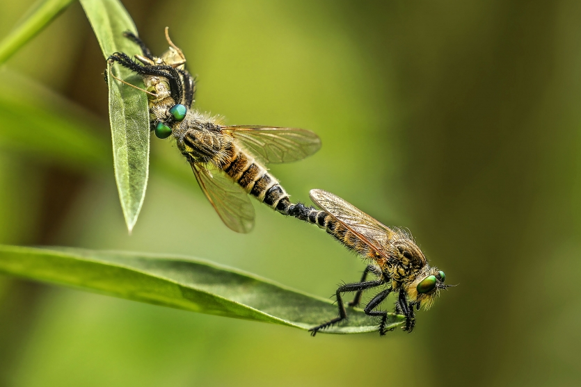 Mating and Eating