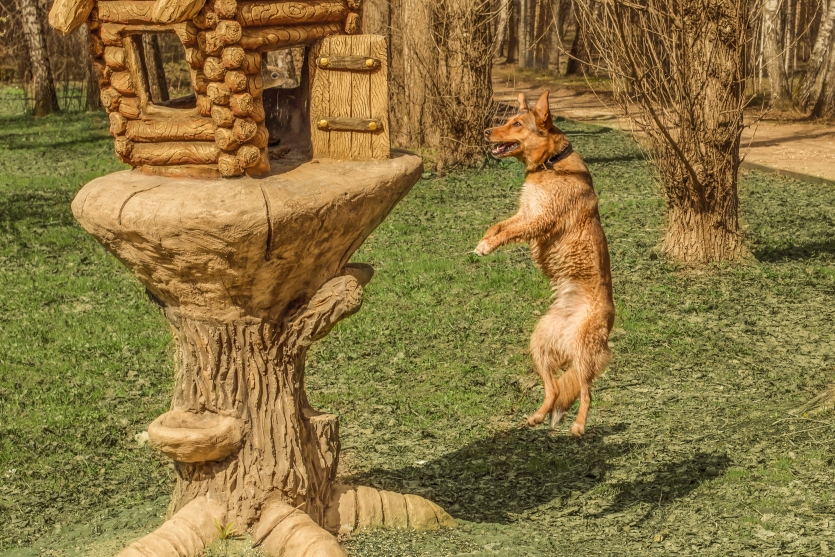 the tale of a flying dog