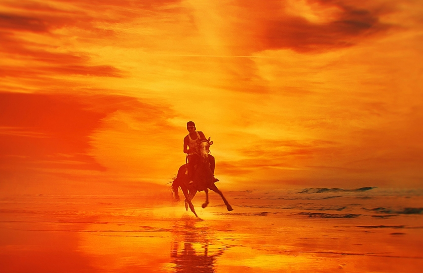 horse in fire sky background